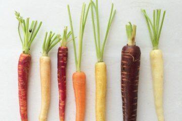 regenboog wortels