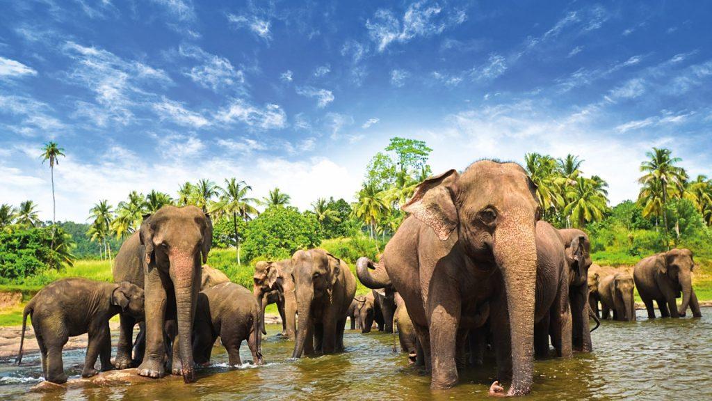Sri Lanka Feelgoodbyfood