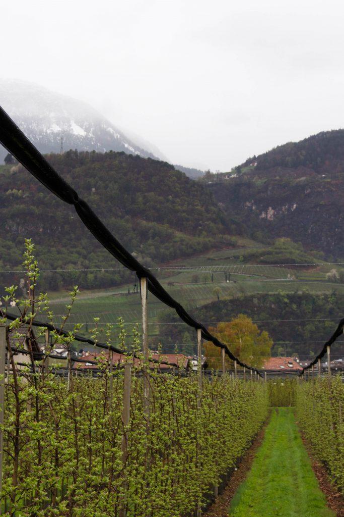 Zuid-Tirol appels